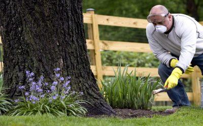 Combate las plagas con tratamientos naturales