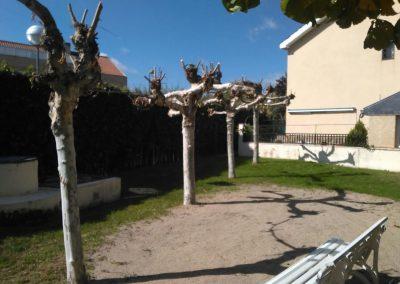 Poda de árboles en comunidad de vecinos